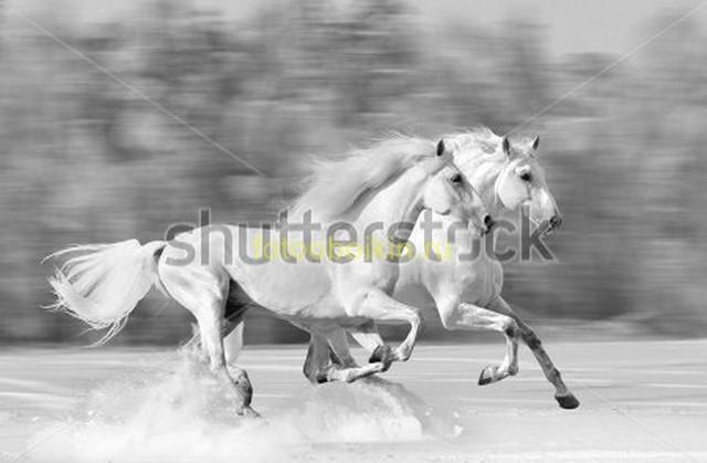Фотообои Бегущие белые лошади