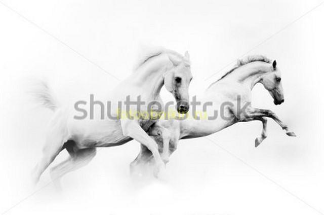 Фотообои Лошади в прыжке