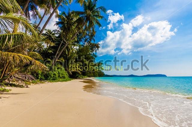 Фотообои Длинная пальма у моря