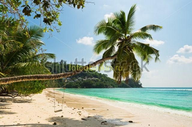 Фотообои Пальмы у берега с облаками