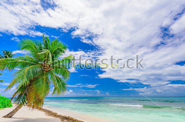 Фотообои Пальма и небо