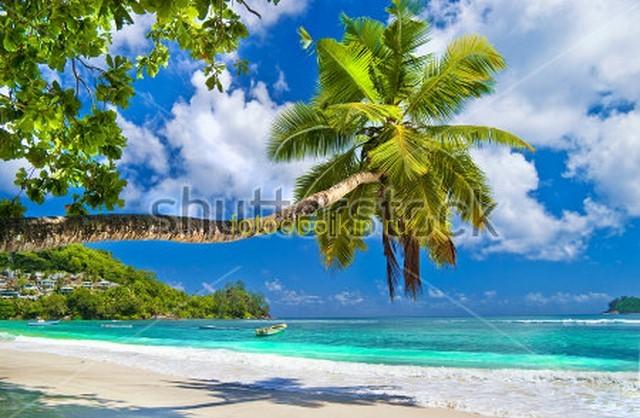 Фотообои Пальма на острове