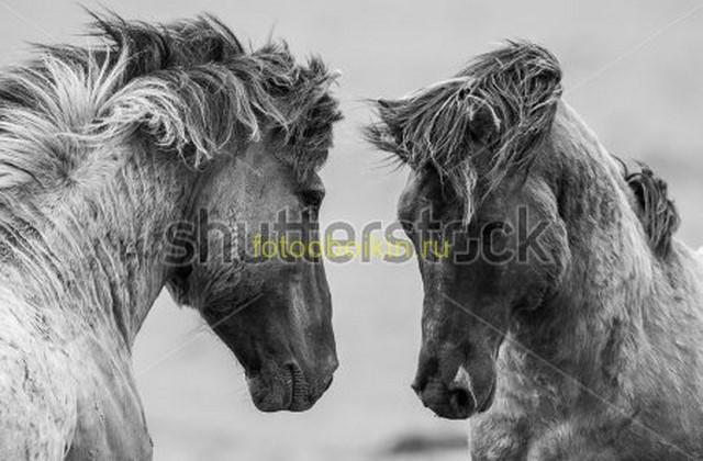Фотообои Красивые лошади