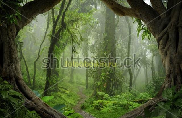 Фотообои Зеленые джунгли