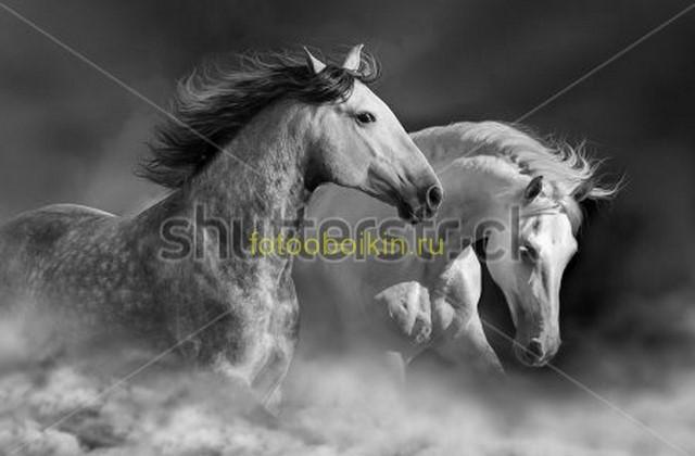 Фотообои Лошади в облаках