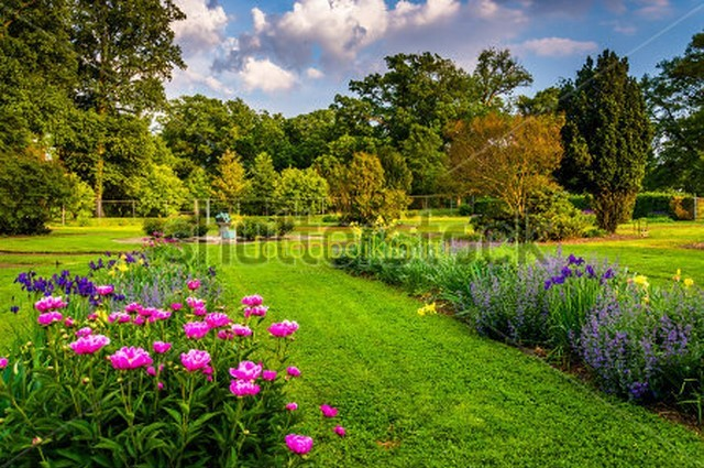 Фотообои Поле с цветами