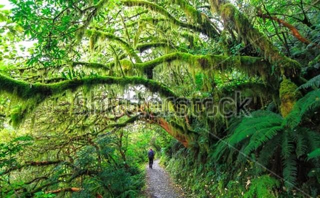 Фотообои Прогулка по лесу