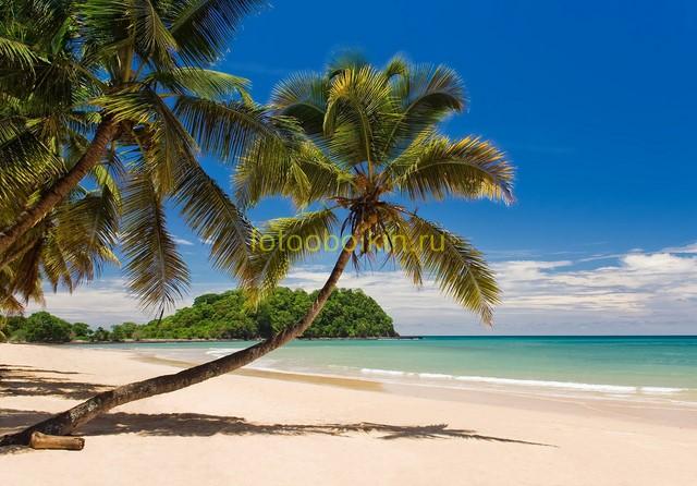 Фотообои Пальмы и бирюзовое море