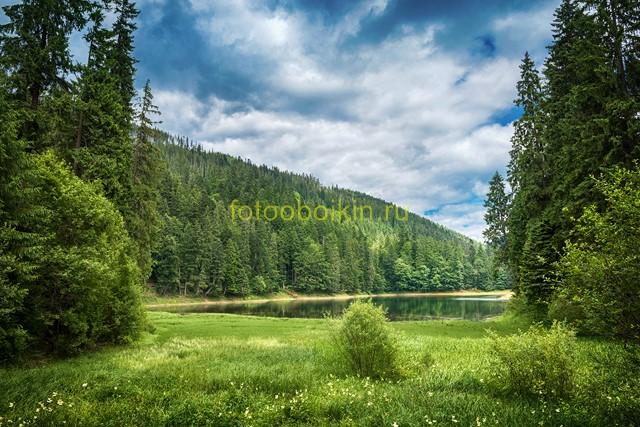 Фотообои Лесное озеро