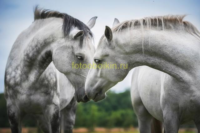 Фотообои Белые кони