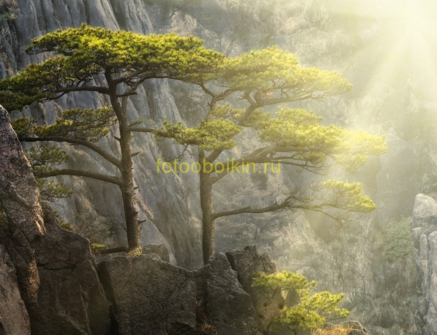 Деревья на скале