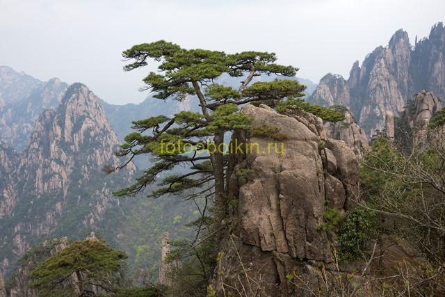 Фотообои Дерево на скале