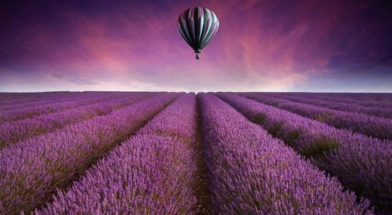 Фотообои Поля лаванды и воздышный шар