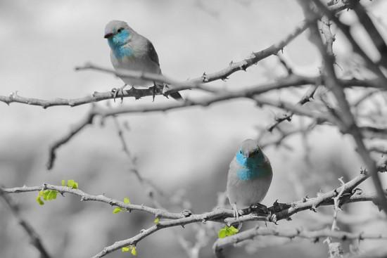 Фотообои Птицы с голубыми вставками