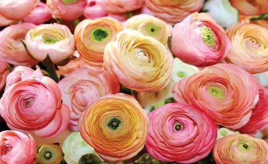 Фотообои Розовые-оранжевые цветы