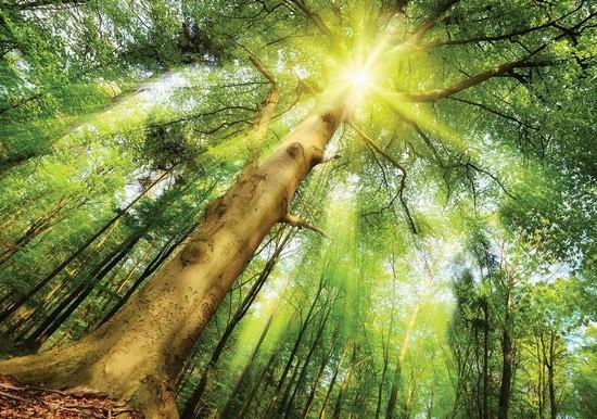Фотообои Солнечное дерево