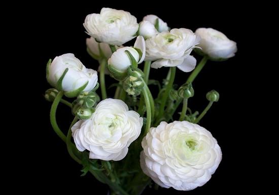 Фотообои Белые цветы на черном фоне