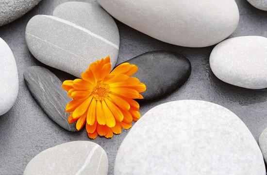 Фотообои Серо-белые камни с оранжевым цветком