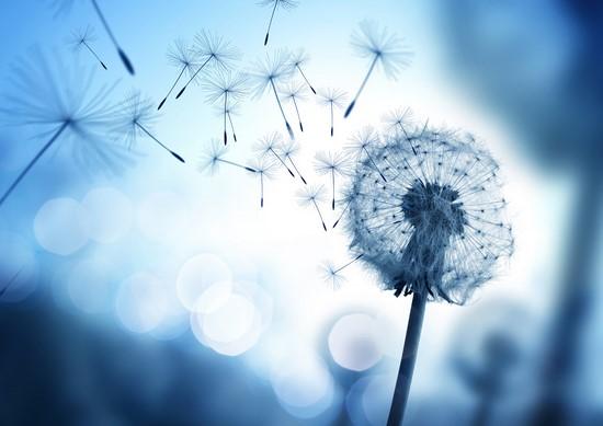 Фотообои Одуванчик воздушный на синем небе