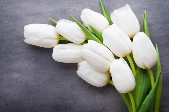 Белые тюльпаны на сером фоне