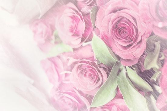 Фотообои Розы в белой пелене
