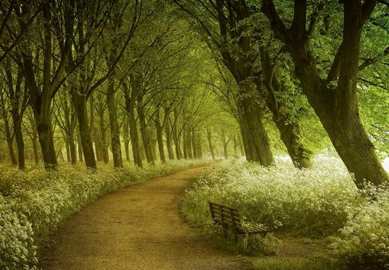 Фотообои Зелено-желтый парк