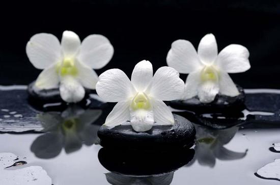 Фотообои Три орхидеи на черных мокрых камнях
