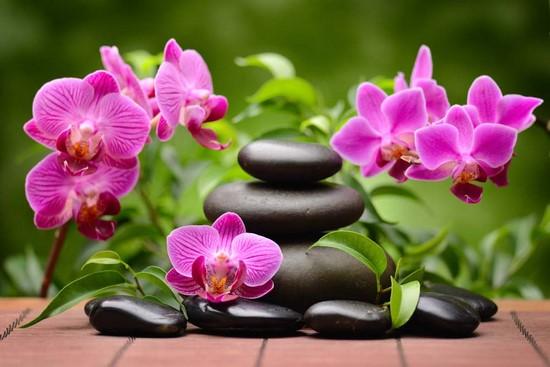 Фотообои Орхидеи ярко-розовые  с камнями