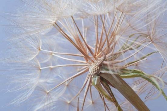 Фотообои Легкий одуванчик на голубом небе