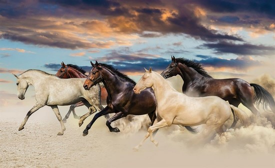 Фотообои Табун разных лошадей