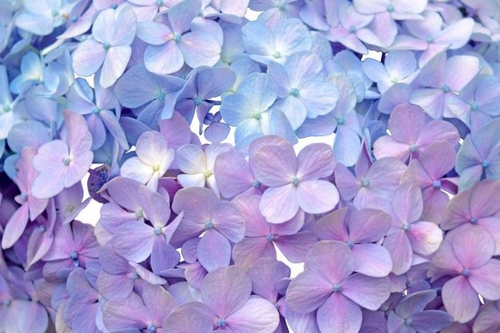 Фотообои Нежно-лиловые цветы