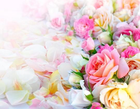 Фотообои Нежная поляна из роз