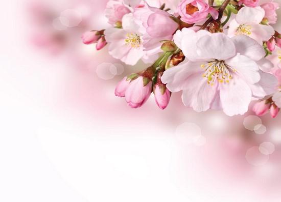 Фотообои Розовые цветы на розовом фоне