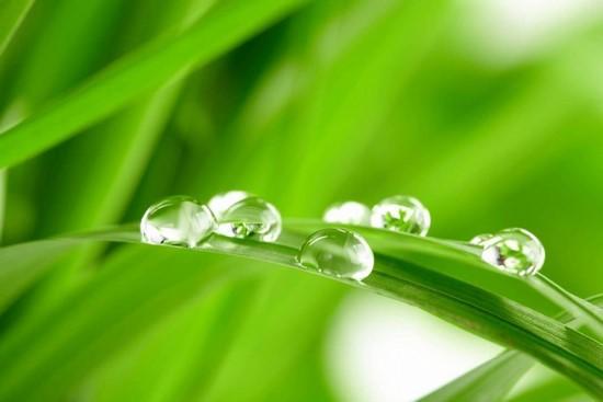 Фотообои Яркая трава с каплей