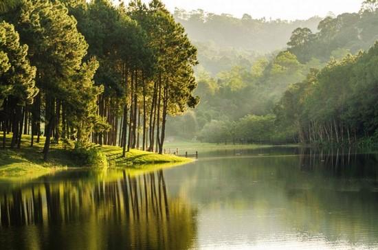Фотообои Прекрасное утро в лесу