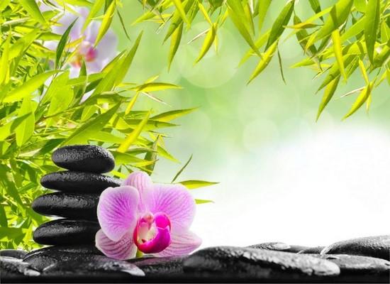 Фотообои Идилия с цветком