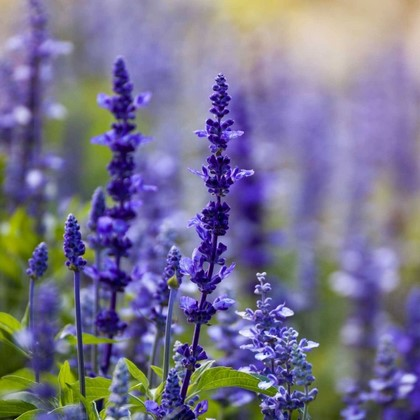 Фотообои Фиолетовый цветок на фоне живописных листьев