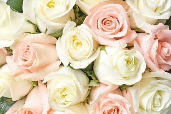 Фотообои Розы зеленые и розовые