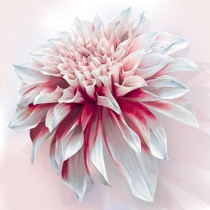 Фотообои Цветок бело-красный