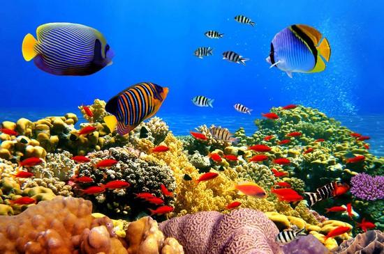 Фотообои Подводный мир и насыщенным цветом