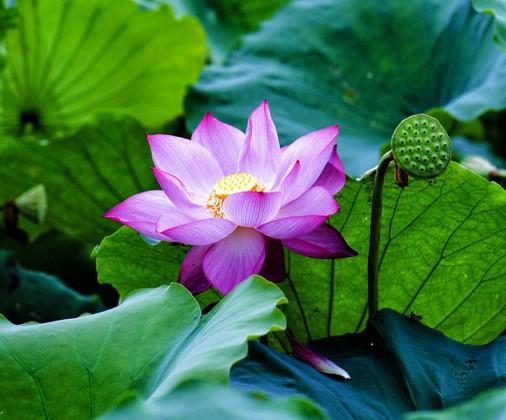 Фотообои Цветок на воде