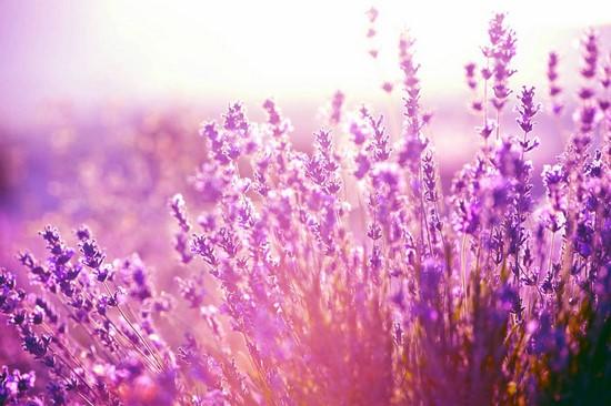 Фотообои Утро в цветочном поле