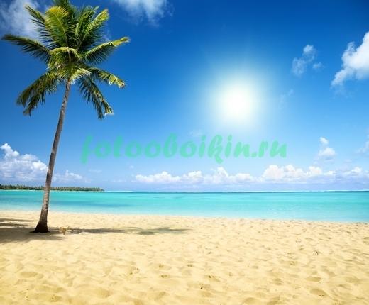 Фотообои Пальма под солнцем