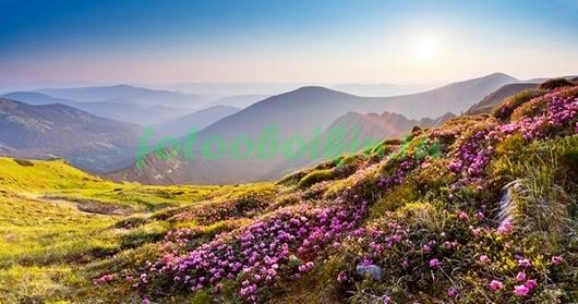 Фотообои Луг в альпах