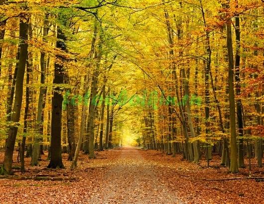 Фотообои Золотой парк