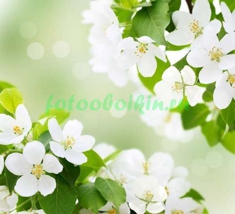 Фотообои Вишня в цвету