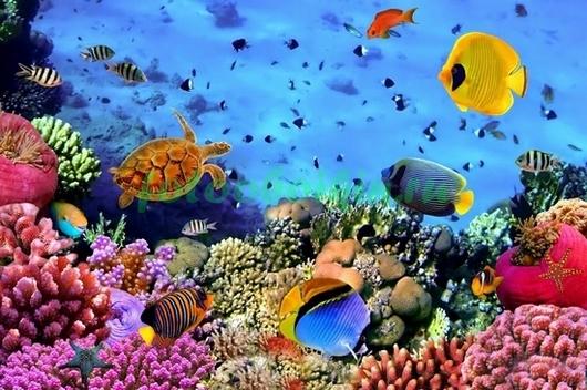 Фотообои Морской мир