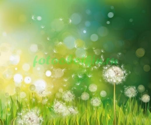 Фотообои Солнечная полянка с одеванчиком