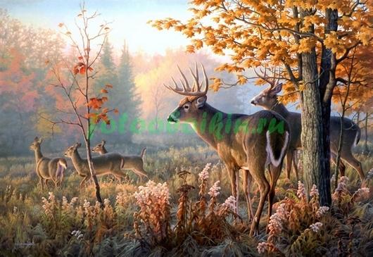 Фотообои Олени в лесу