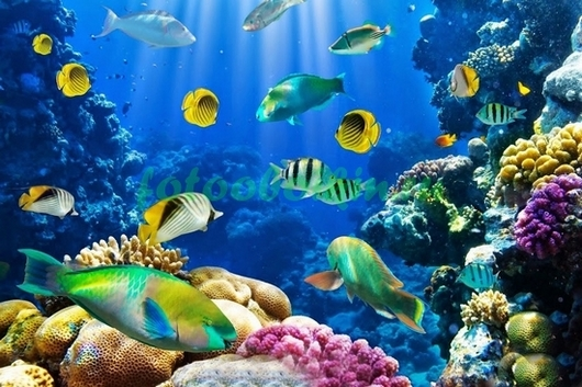 Фотообои Множество красочных рыб